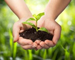 Incontro sul biologico e vegano